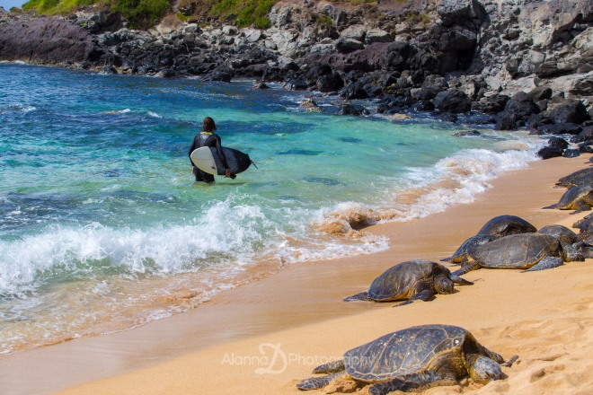 Turtles in Paia