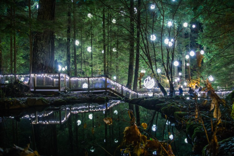 Christmas at Capilano Suspension Bridge