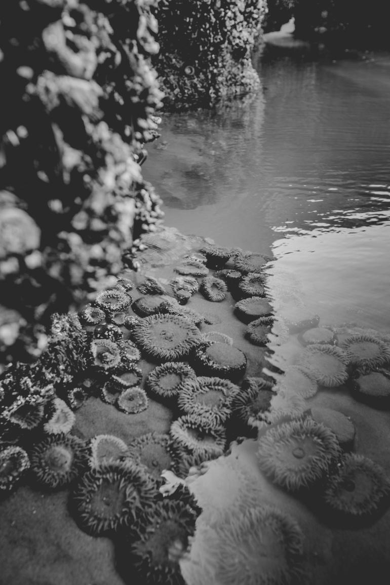 The Wild West Coast Tofino - Alanna D Photography