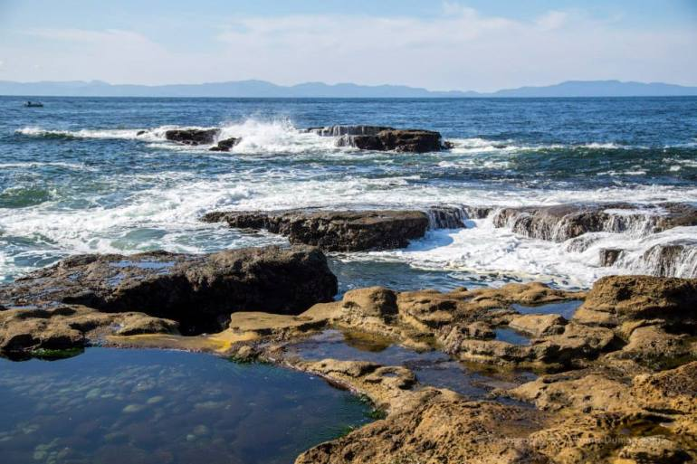 Botanical Beach Port Renfew - Alanna D Photography
