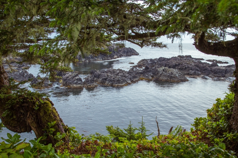 Lighthouse Trail Ucluelet by AlannaDphoto.com