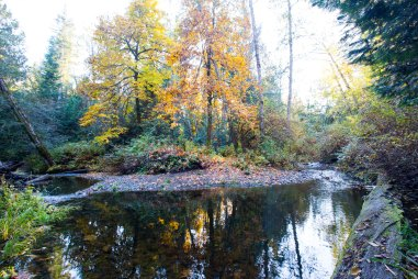 Nanoose Creek in our backyard