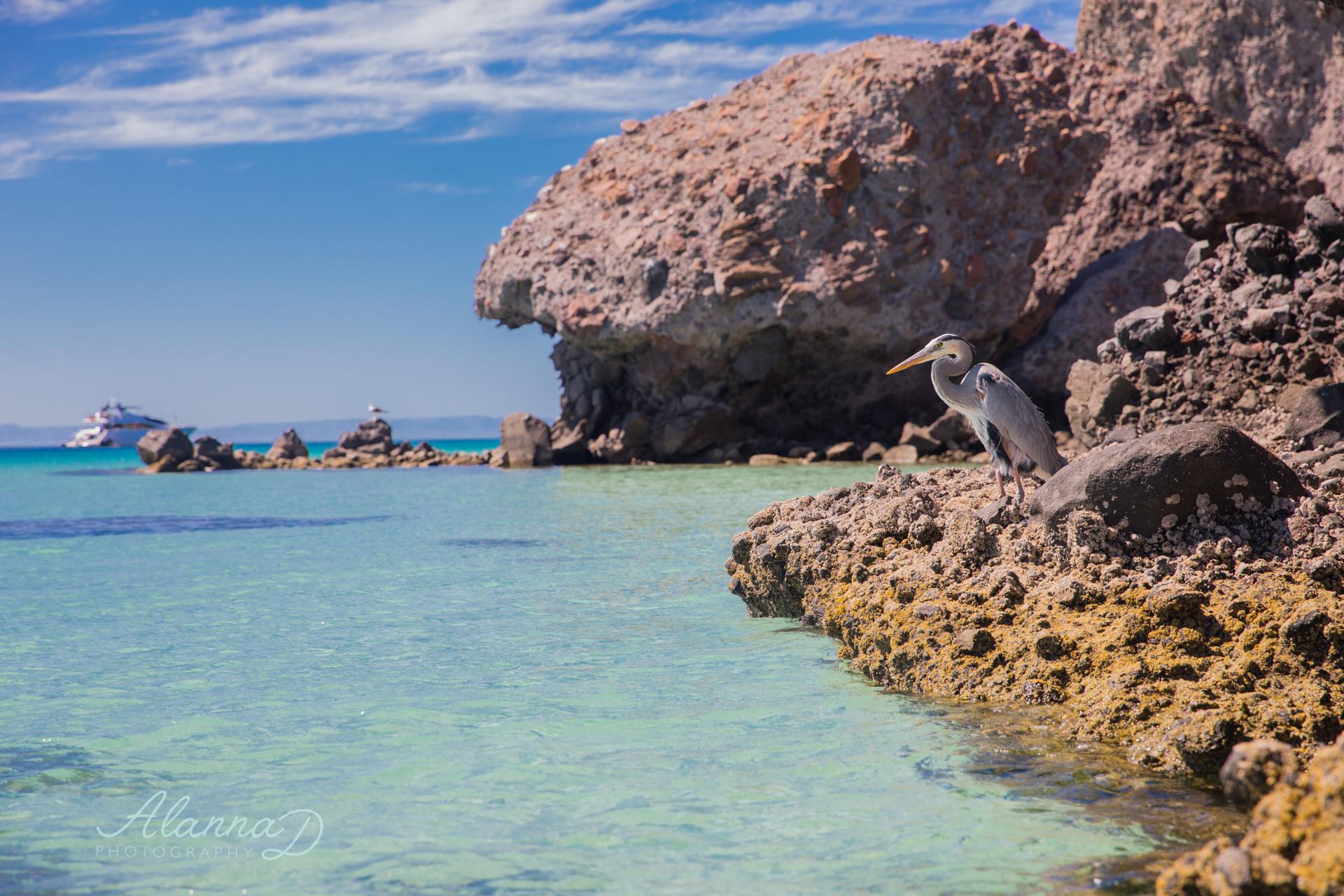 Balandra Beach, Playa Balandra, La Paz