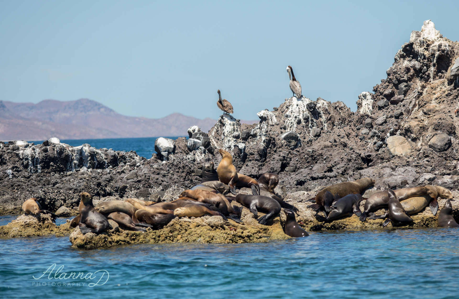 Sealion Snorkle Tour La Paz Mexico - Alanna D Photography