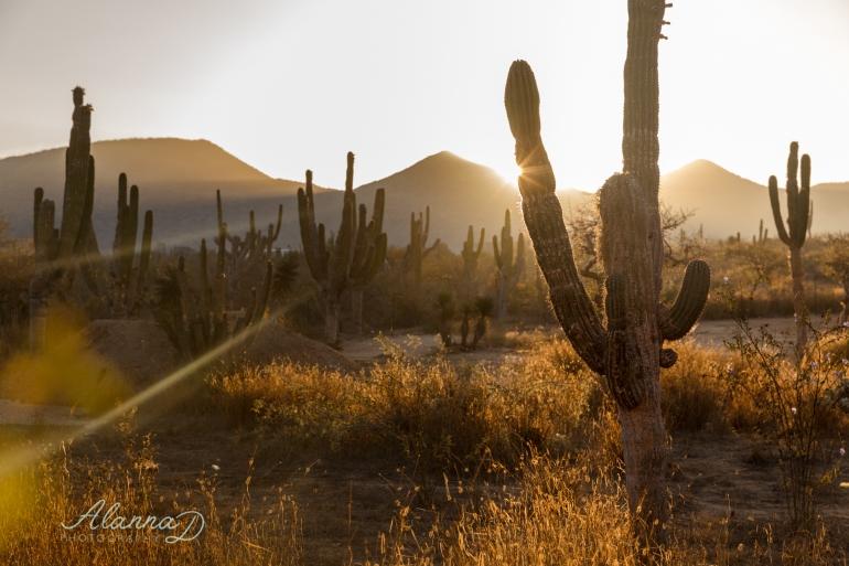 Sunrise at Cerritos Beach Alanna D Photography