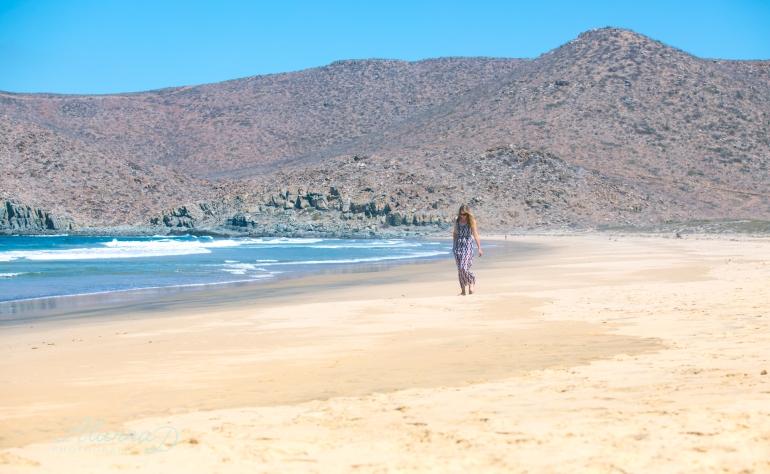 Beach of Palms - Alanna D Photography