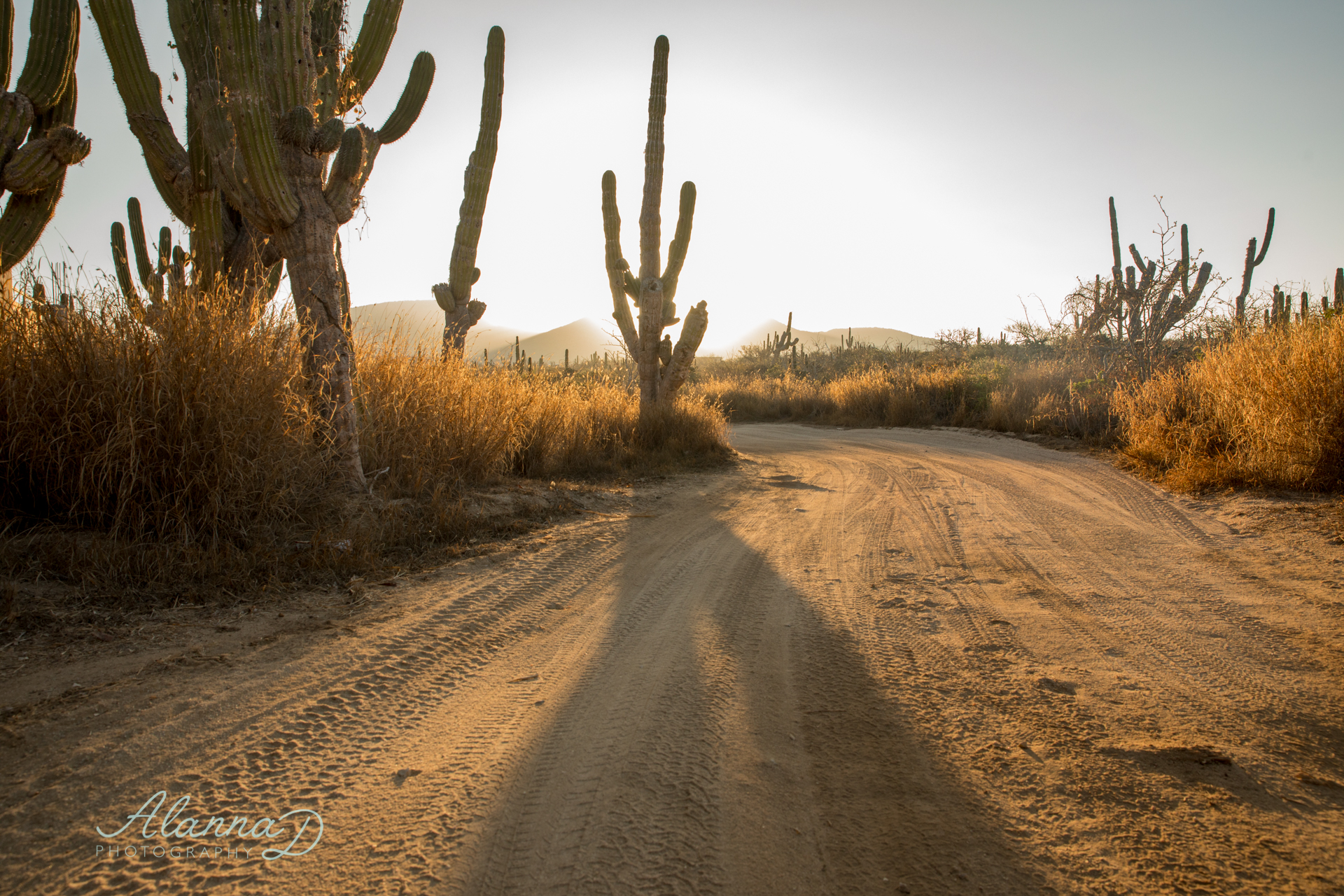 Off the Beaten Path Mexico - Alanna D Photography
